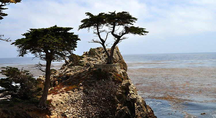 17-Mile Drive with the Lone Cypress