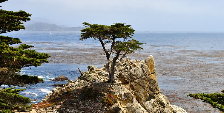 17-Mile Drive Lone Cypress