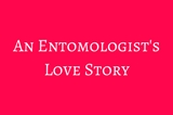 An Entomologists
