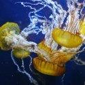 aquarium bay