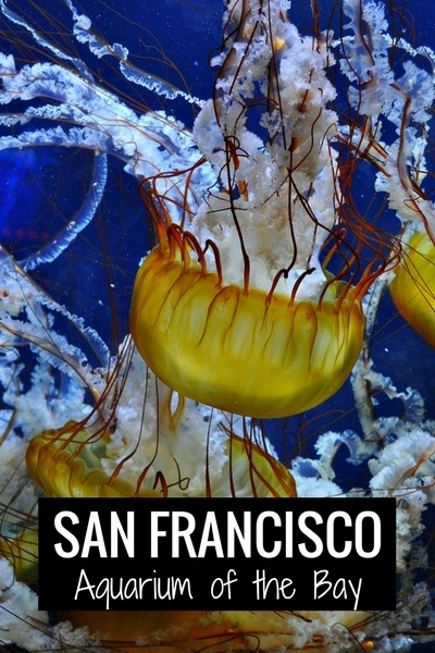 Aquarium of the Bay SF