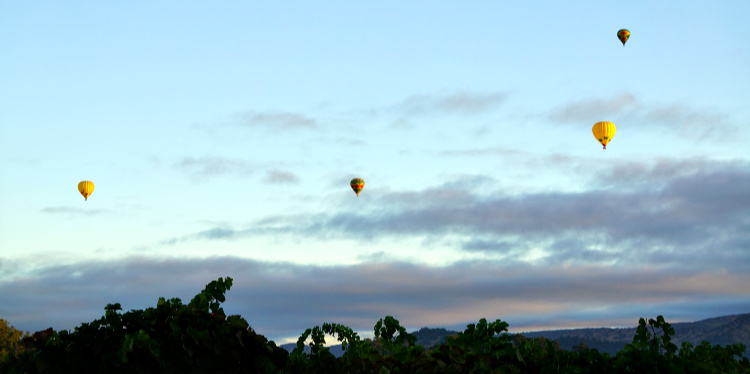 Balloons Over Napa vineyards