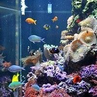 Bay Aquarium SF