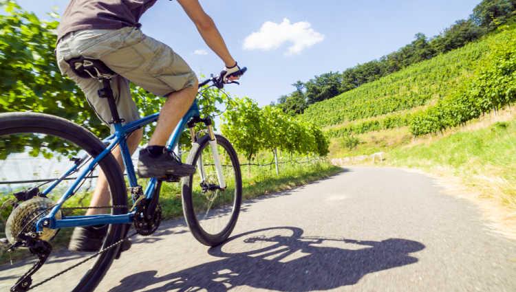 Bike Riding through the vineyards