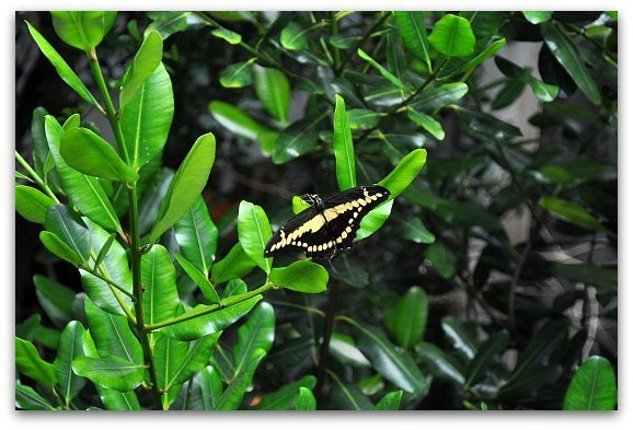 butterfly academy sciences