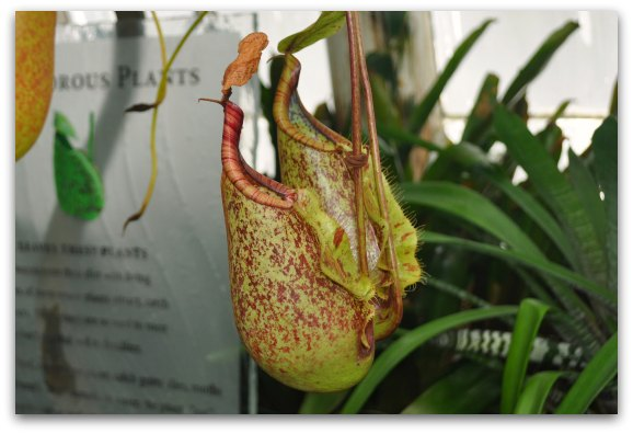 carnivorous plants conservatory sf