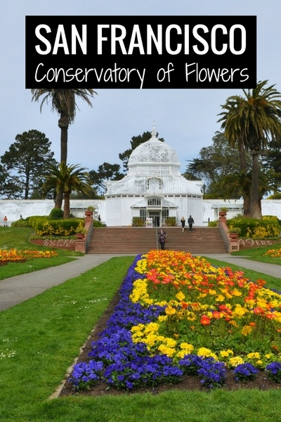 Conservatory Flowers