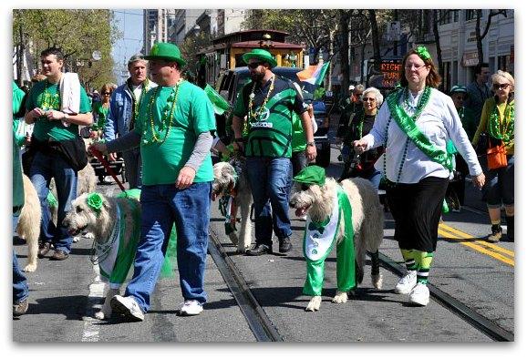 irish hounds in parade
