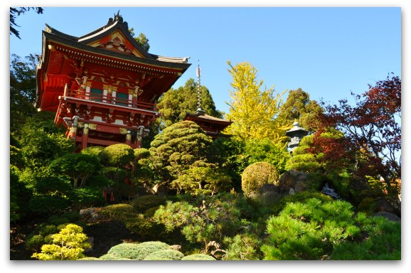 dwarf trees japanese tea garden