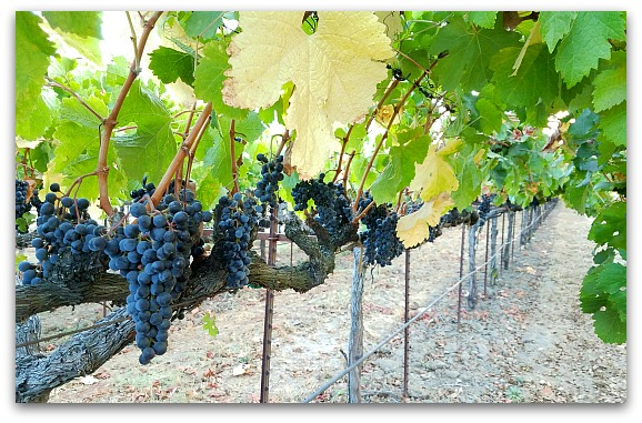 Events in Napa in February