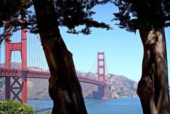 Golden Gate Bridge Two Trees