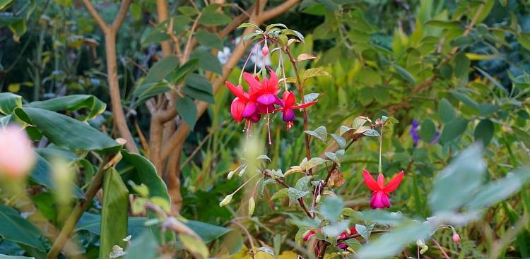 Grace Merchant Flowers