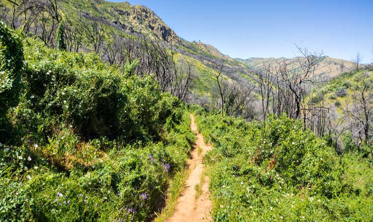 Hiking in Napa