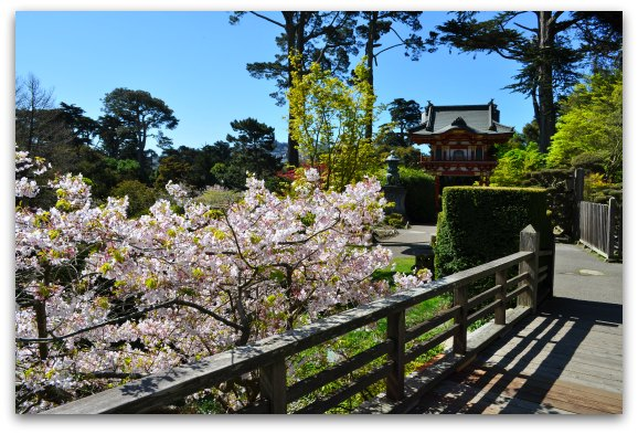 San Francisco Gardens Where To Find These Colorful Gems