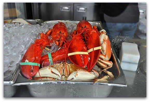 lobster taylor