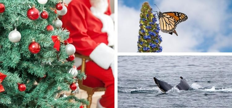 Monterey Events in December