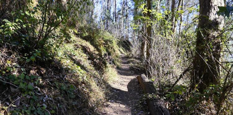 Mount Sutro Trail