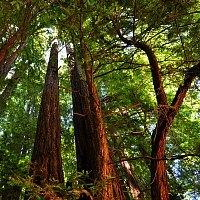 Muir Woods HP