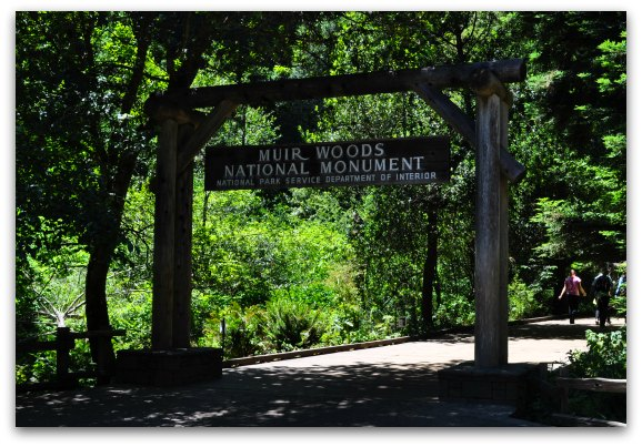 Muir Woods National Park What To Expect During Your Visit