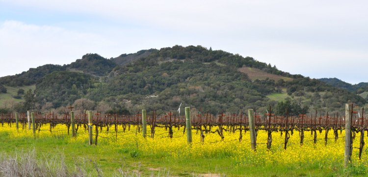 Napa Weather in February