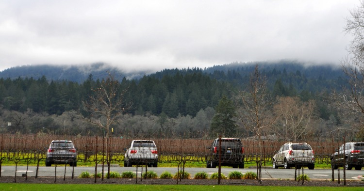 Napa Weather in January: Cloudy, lovely day in wine country