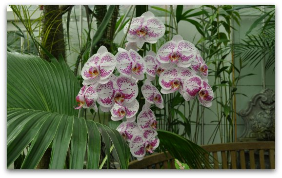 orchids conservatory flowers sf