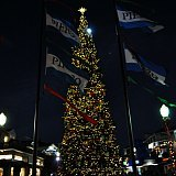 Pier 39 Tree Lighting