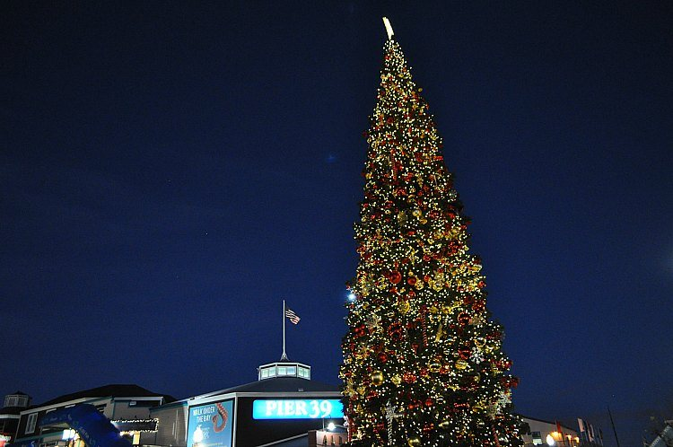 Pier 39 Christmas Tree Lighting