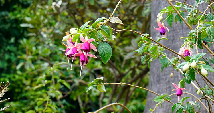 Pink Flowers in a garden in SF