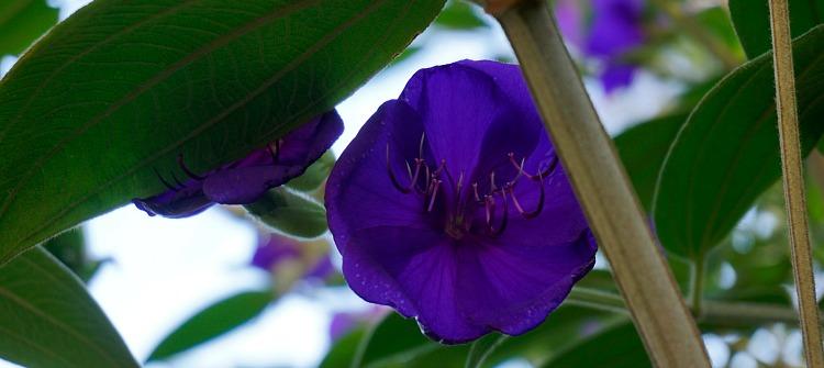Purple Flowers in SF