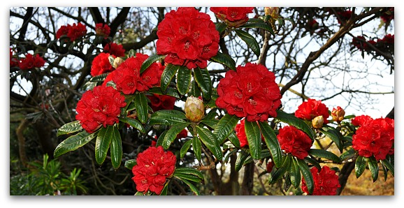 Red Flowers in the Botanical Gardens in SF