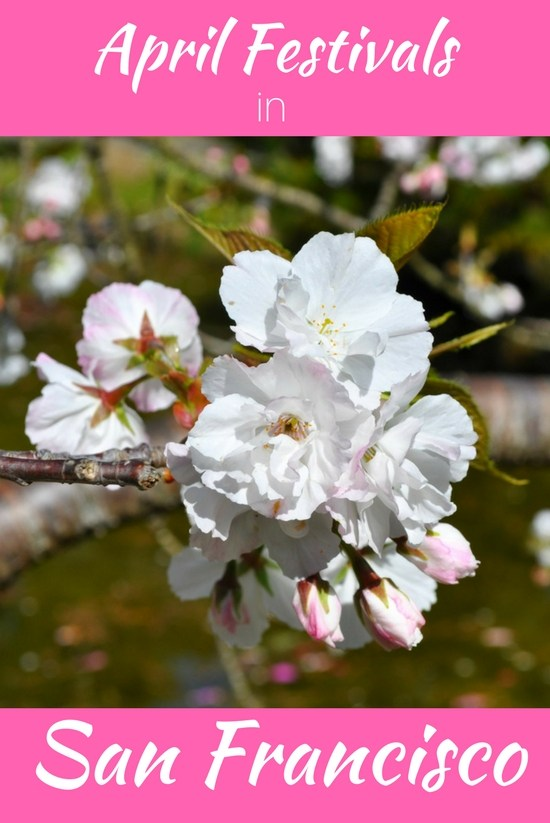 San Francisco Festivals in April: Cherry Blossom, Beer, Film & More
