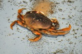seafood sf