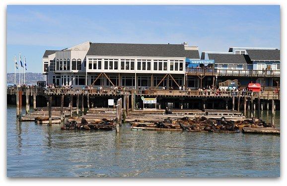 sealions pier 39