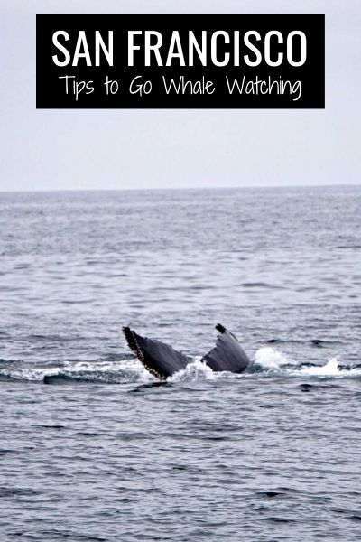 Tips to Go Whale Watching in San Francisco