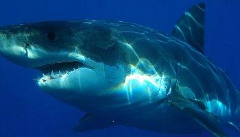 Shark Diving in November