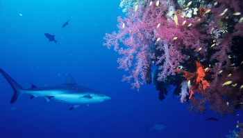 Shark Diving in SF
