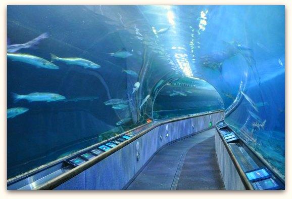 sharktank sf aquarium
