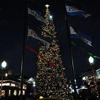 Tree Lighting Pier 39