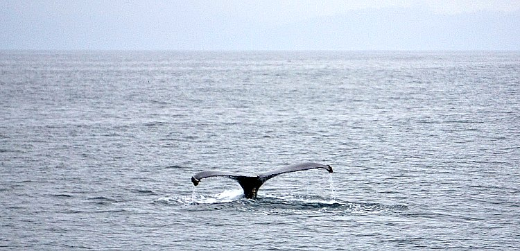 Whale's Tale in Montery Bay