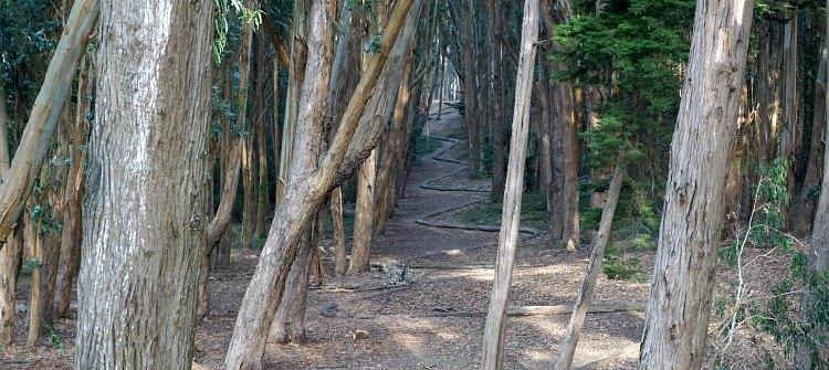 Wood Line Presidio