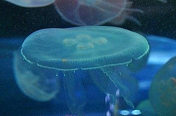 Aquarium Bay City Pass SF