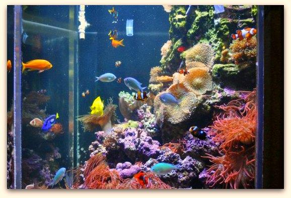 fish in the aquarium in SF