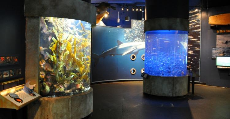 Aquarium with Toddlers