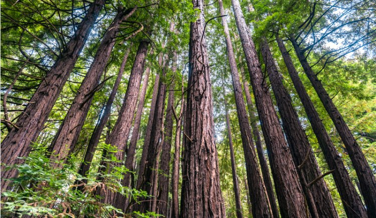 Armstrong Redwoods Park