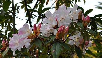 Botanical Gardens in June