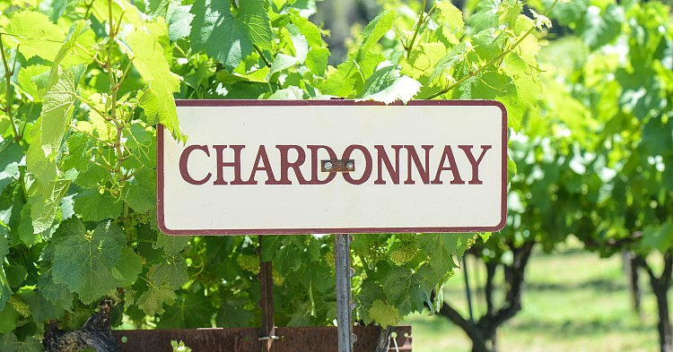 Chardonnay sign in a Napa Valley vineyard