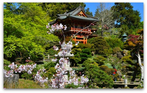 Cherry Blossoms in the Japanese Tea Garden