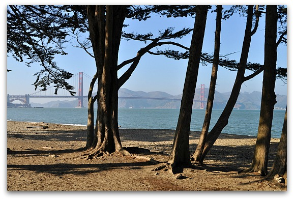 Crissy Field trees with the Golden Gate Bridge behind