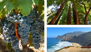 Day Trips from SF
